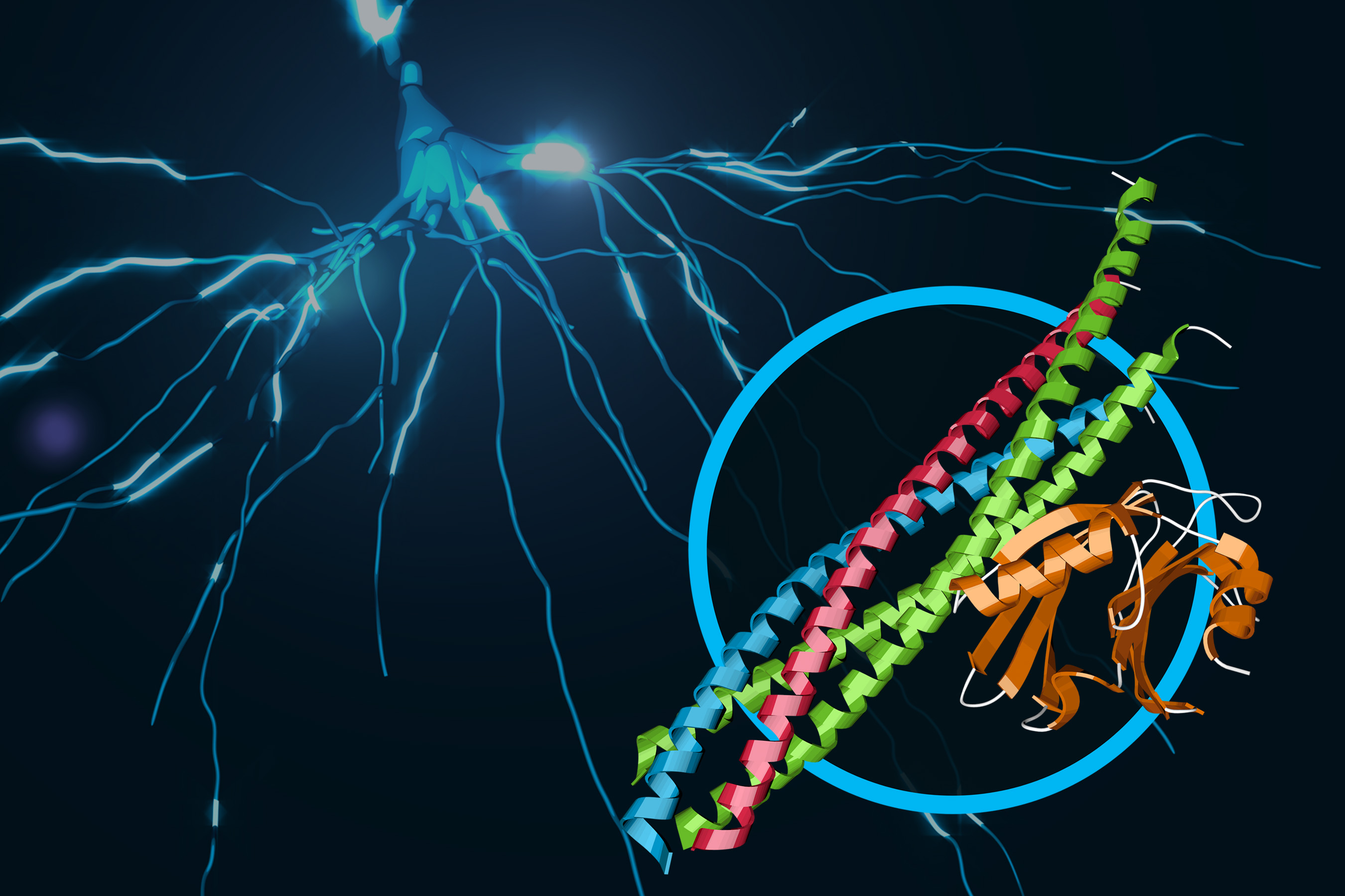 Image - This illustration shows a protein complex at work in brain signaling. Its structure, which contains joined protein complexes known as SNARE and synaptotagmin-1, is shown in the foreground. (SLAC National Accelerator Laboratory)