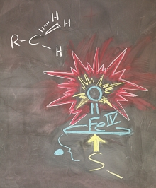 Image - A chalk drawing showing the key bonds in the cytochrome intermediate compound. The shorter iron-sulfur bond enables the more reactive double-bonded oxygen atom to extend farther out on the other side and participate in an activation reaction.