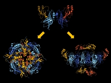 Illustration - Ebola virus structural arrangements