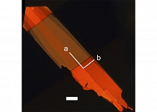 Single crystal of new organic semiconductor shown in polarized light (Image by Anatoliy Sokolov.)