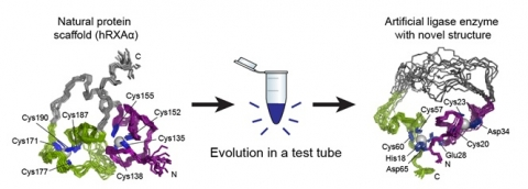 Illustration showing creation of new enzyme using directed evolution.